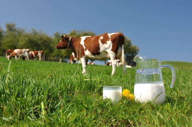 Субсидии на реализацию молока начнут выплачивать в Курганской области