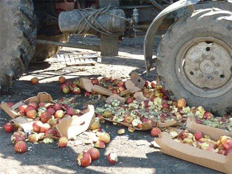 В Курганской области уничтожено 80 килограммов польских яблок.