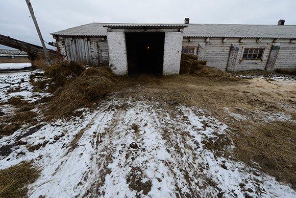 Правительство пожалело денег Курганской области на строительство  коровников.