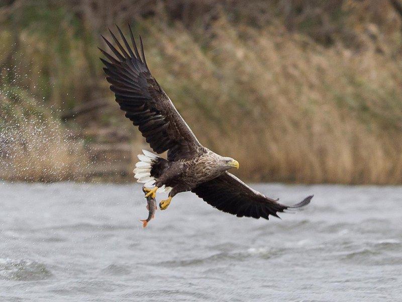 В Далматово у браконьеров изъяли орлана - белохвоста.