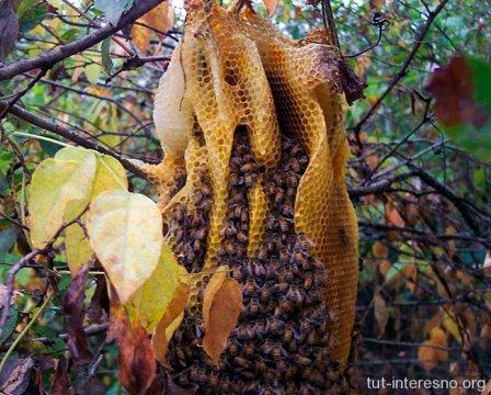 Пчелы нападают....