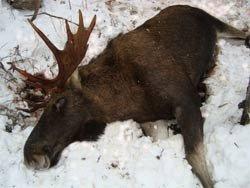В лесах Курганской области ловят браконьеров