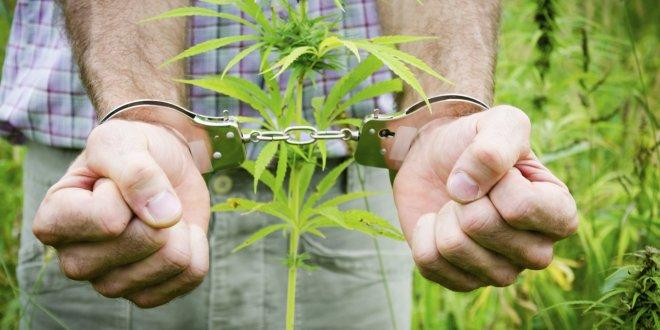 10 лет грозит жителю Кургана за сбор и хранение наркотических препаратов