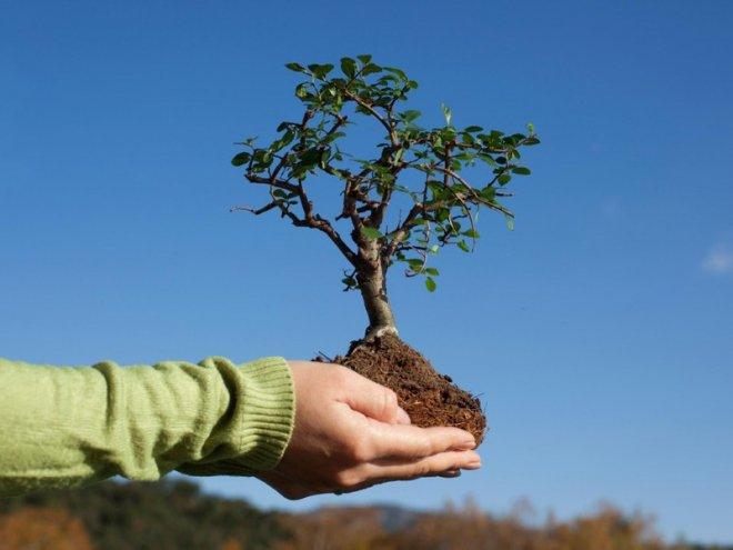 В Кургане было высажено 200 новых деревьев